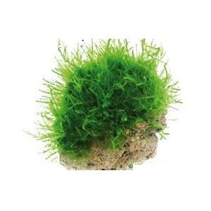 5.Moss Stone