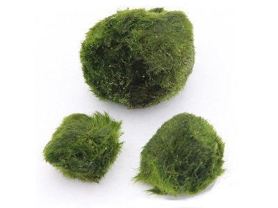 A.1 Plante de acvariu